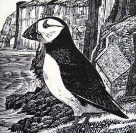 Copy of Ian Stephens Puffin