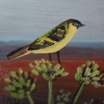 Greenfinch SOLD