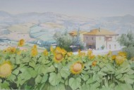 Sunflowers in Vasciano