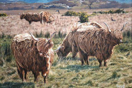 Highlanders by George Davies
